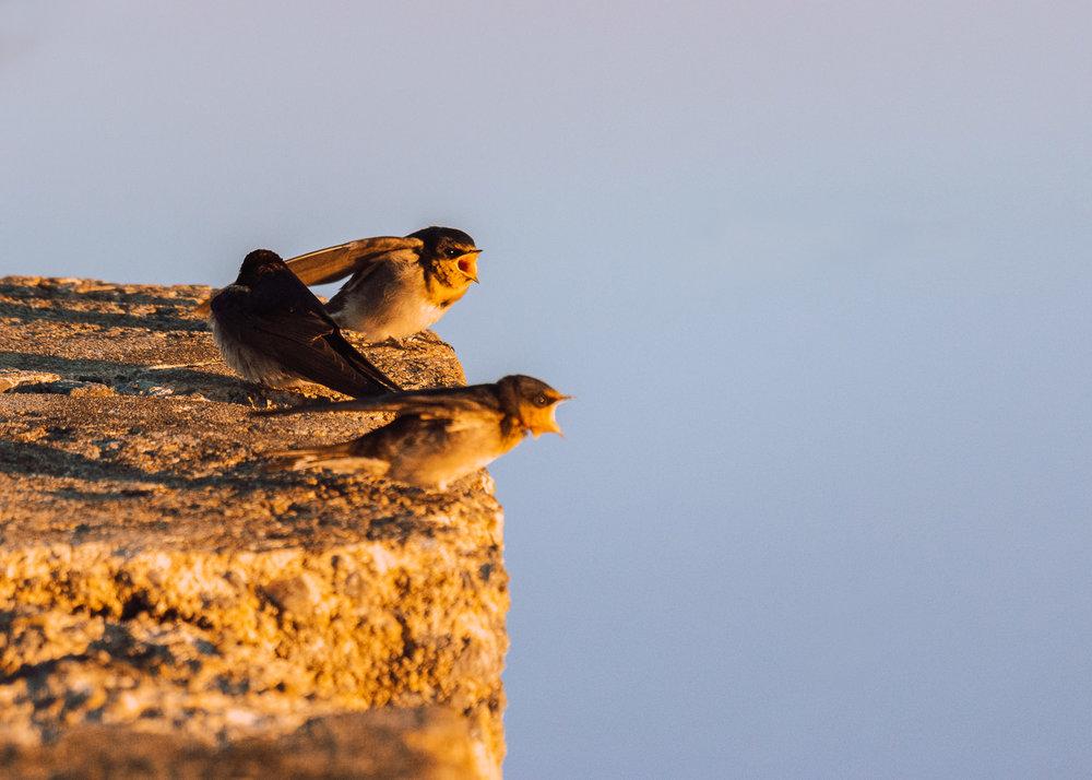 waterfront-swallows-sandgate-dawn-2.jpg