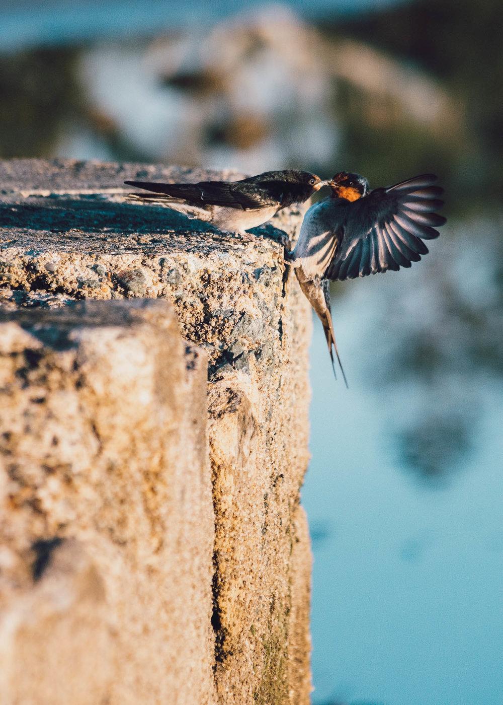 waterfront-swallows-sandgate-dawn-3.jpg