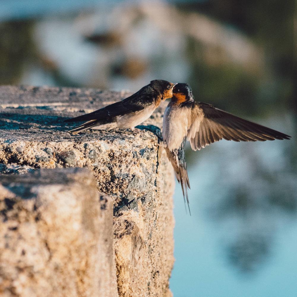 waterfront-swallows-sandgate-dawn-4.jpg