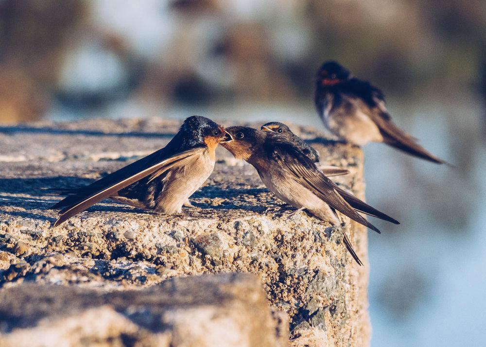 waterfront-swallows-sandgate-dawn-5.jpg