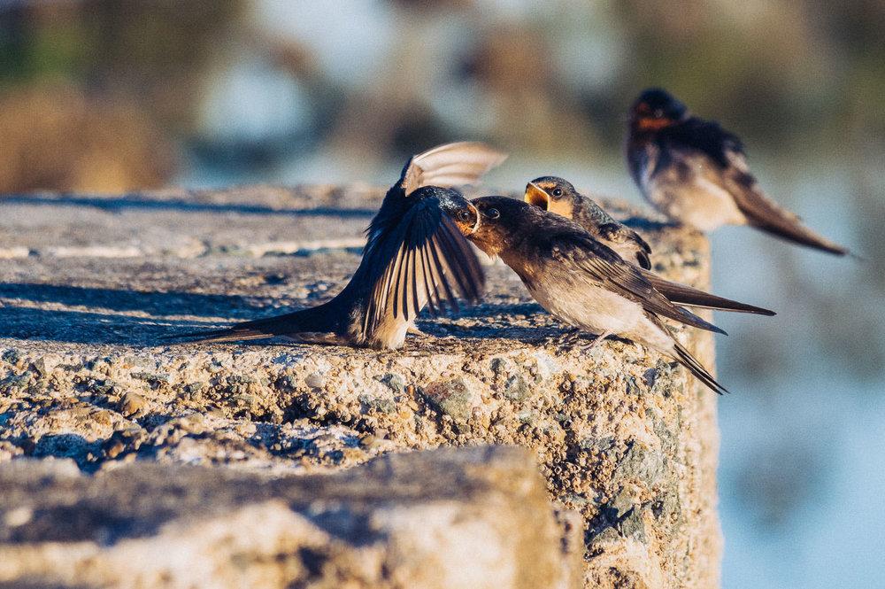 waterfront-swallows-sandgate-dawn-6.jpg