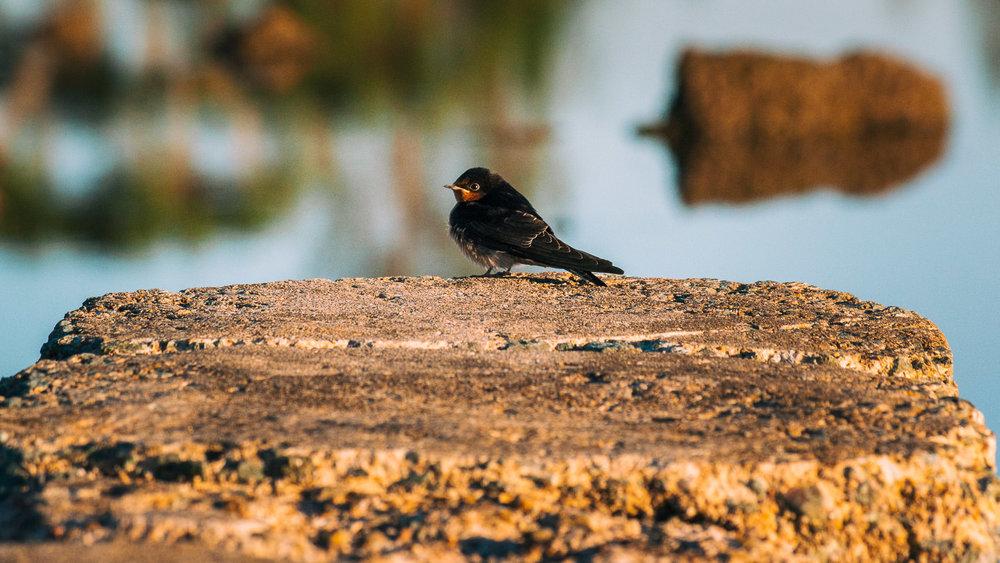 waterfront-swallows-sandgate-dawn-7.jpg