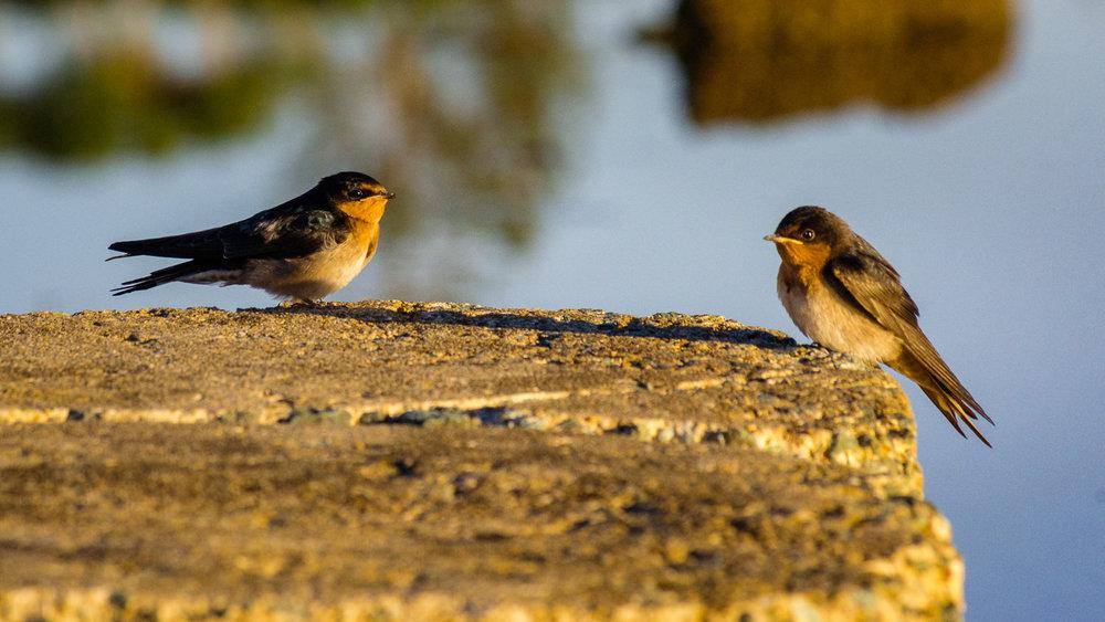 waterfront-swallows-sandgate-dawn-8.jpg