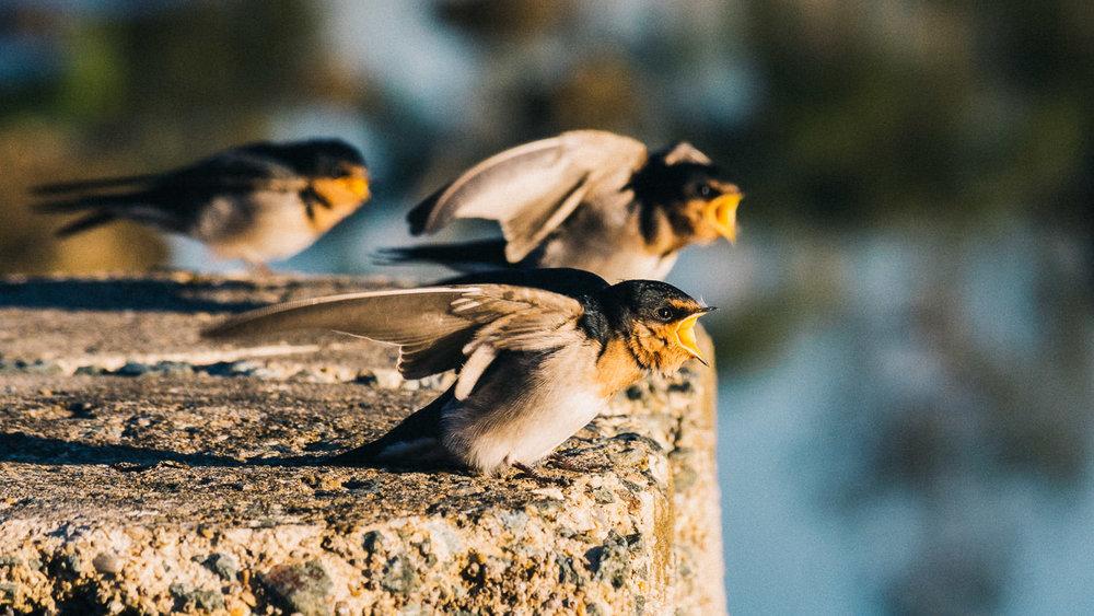 waterfront-swallows-sandgate-dawn-9.jpg