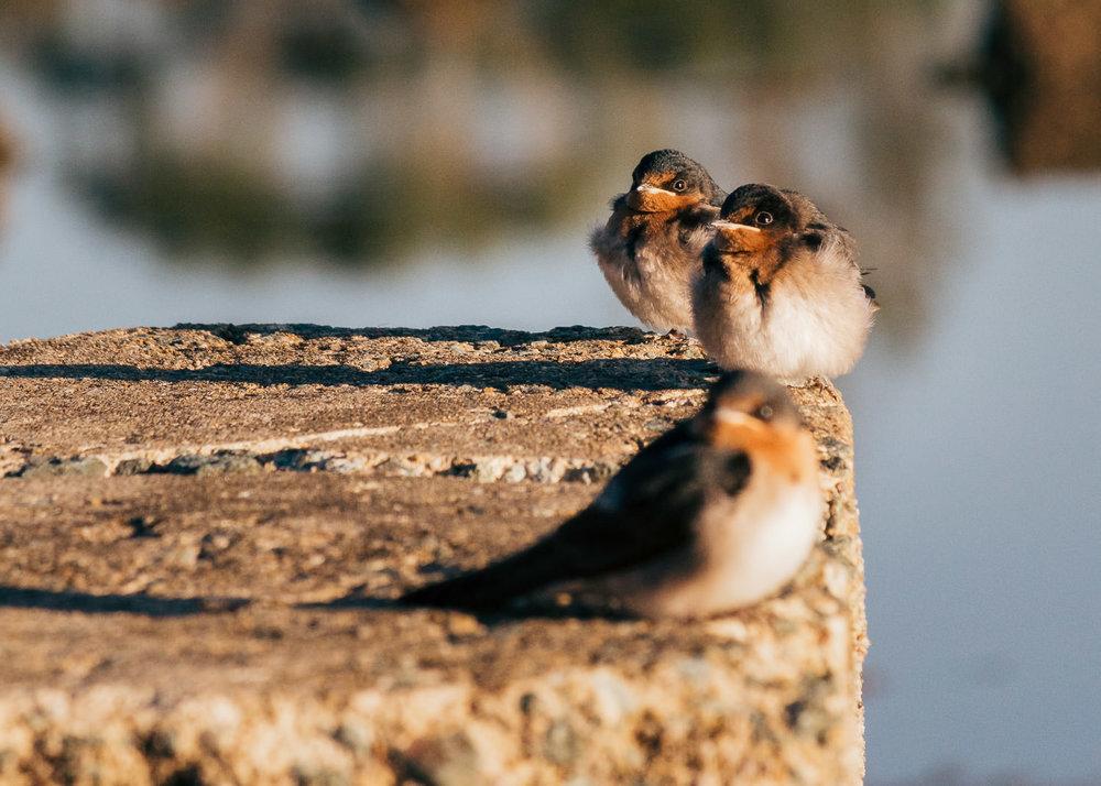 waterfront-swallows-sandgate-dawn-10.jpg
