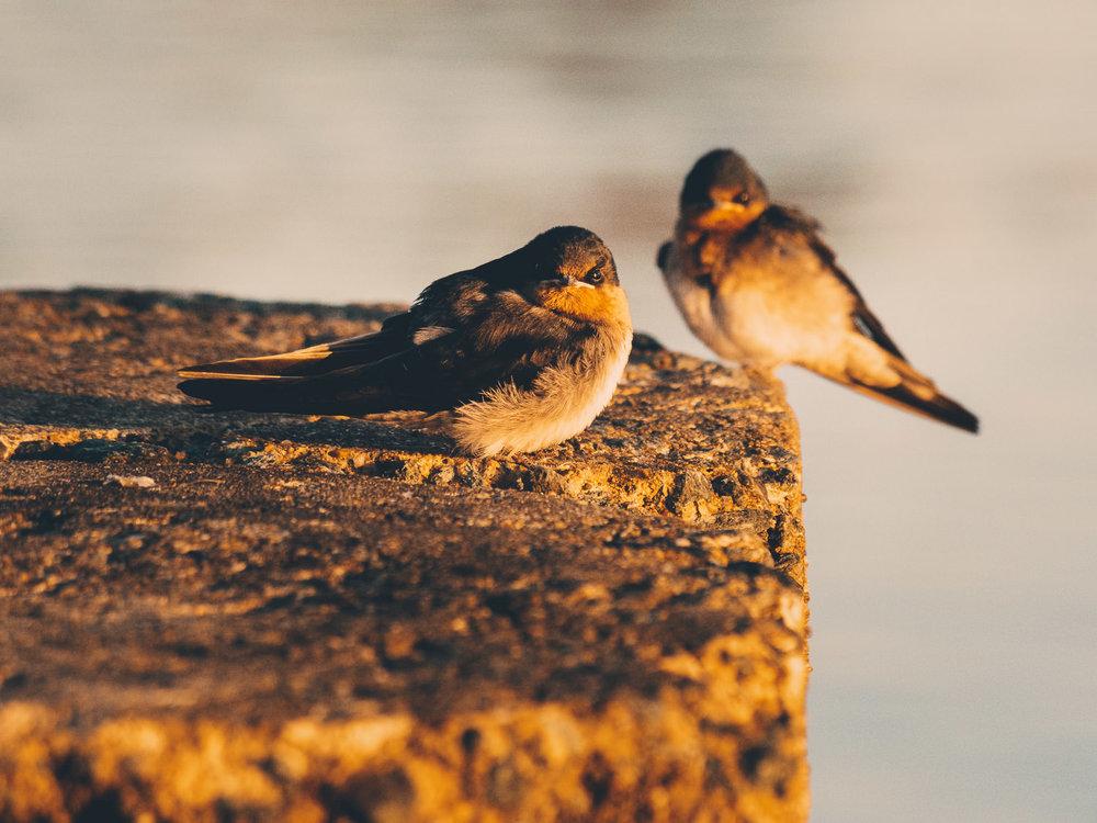 waterfront-swallows-sandgate-dawn-12.jpg