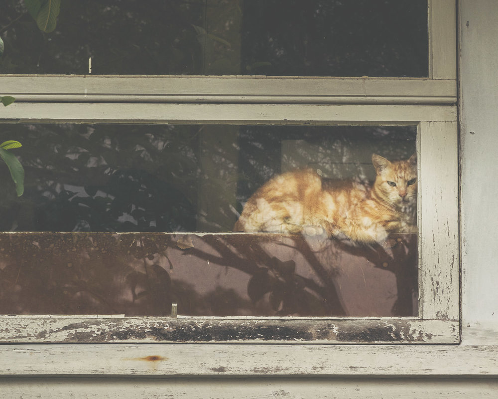 A ginger cat (not Flash - one of his neighbours/adversaries) in a sunny spot in his front window.