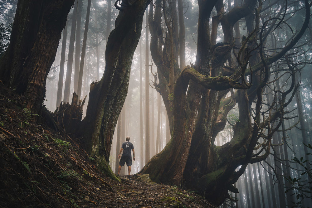 Also in 2015, I did a few days on the ancient pilgrimage trail, the Kumano-Kodo, in Wakayama Prefecture. Soon after taking this shot, I dropped & broke my most expensive camera. It would never manually focus again...