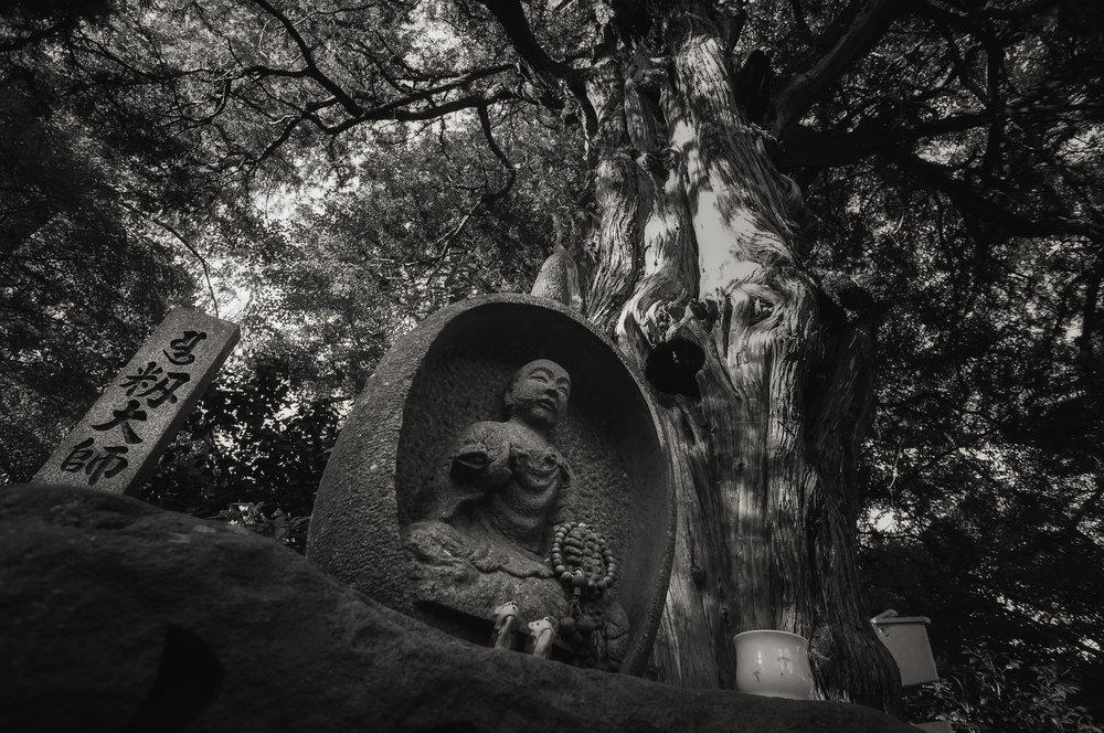 Day 18: A thousand-year-old juniper at Yasaka-ji, Ehime.