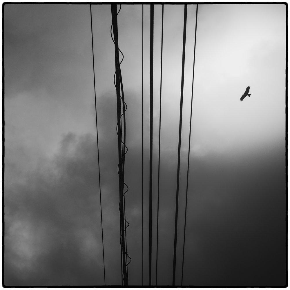 Day 23: A tonbi (black kite) patrols the skies near Iwamatsu, Ehime.
