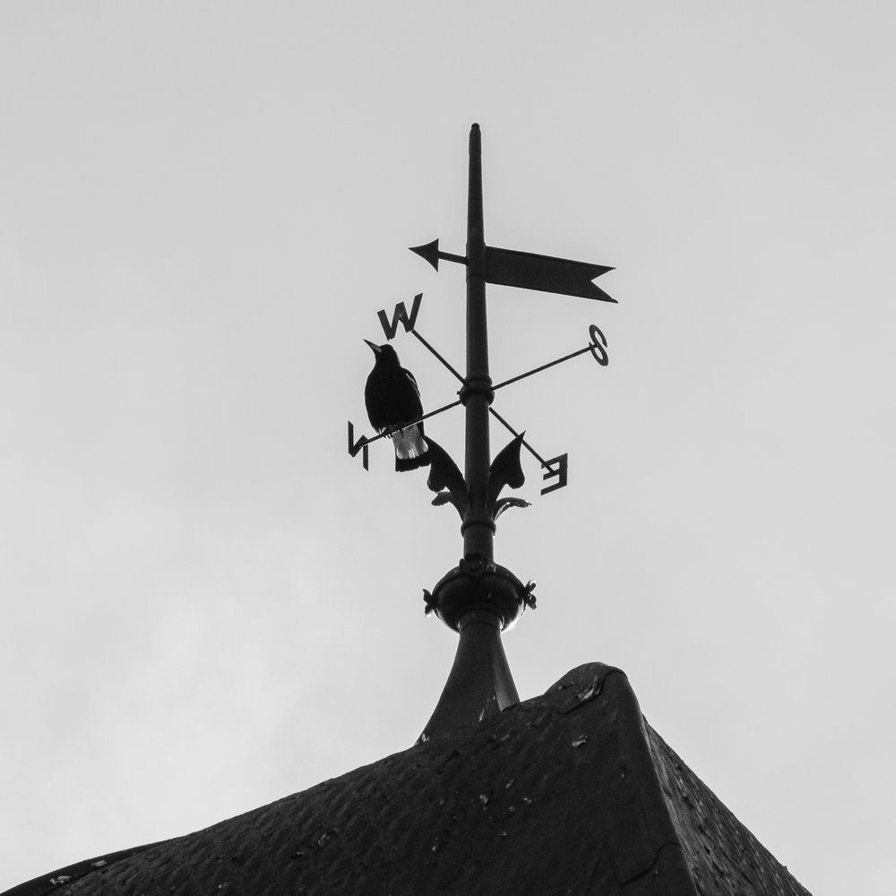 You Don't Need a Weathervane to Know Which Way the Wind Blows