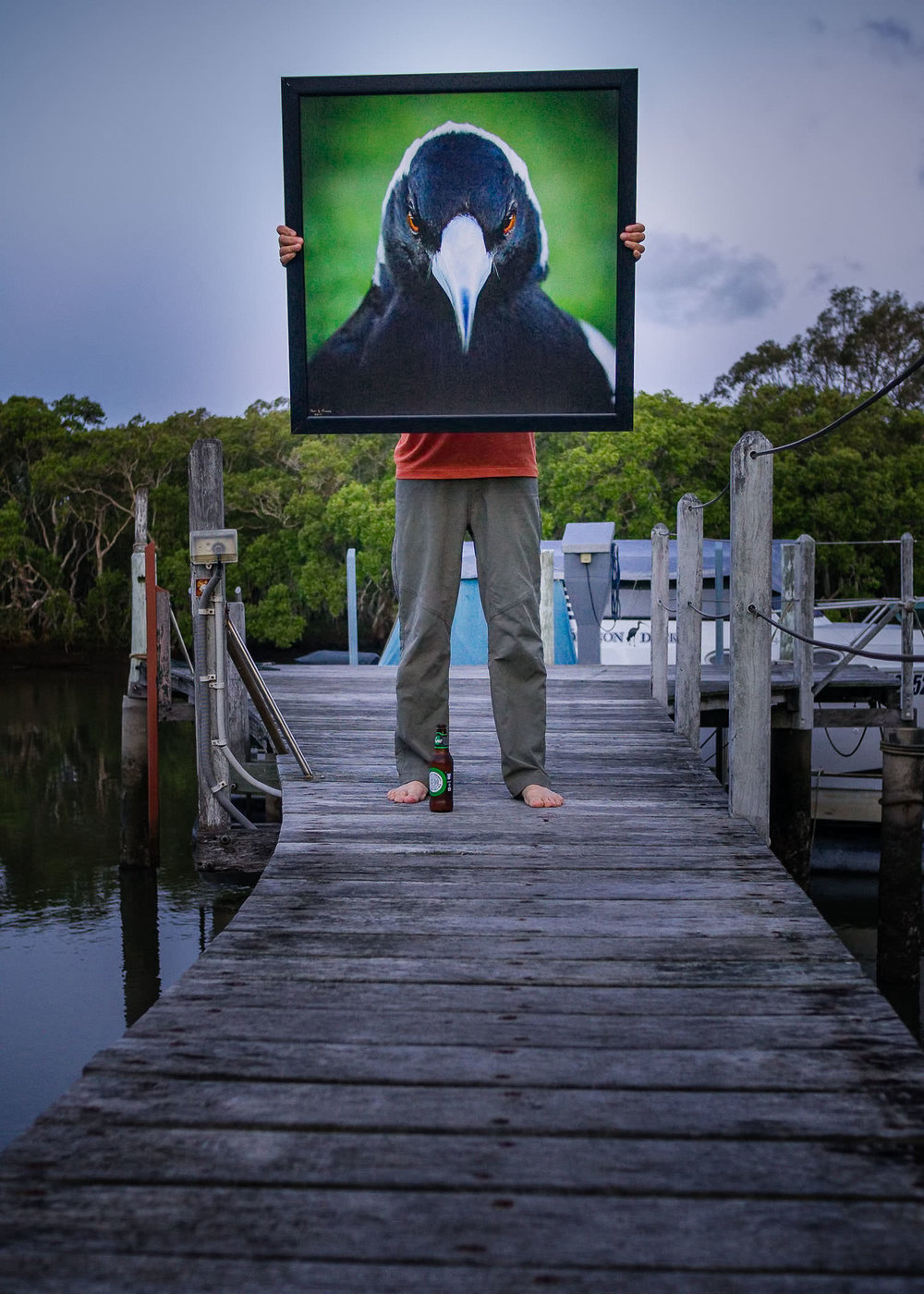 Cracticus Maximus: in a frame within a frame, Cabbage Tree Creek, dusk.
