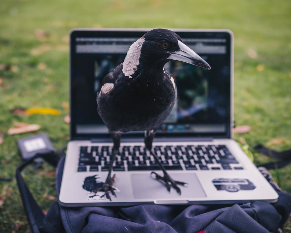 WORKFLOW INTERRUPTED: Beady takes liberties in the Einbunpin park in Sandgate.