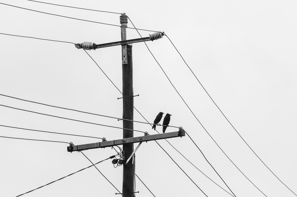 Frankie & Igor, A Mother Crow & Her Offspring, Do Their Thing