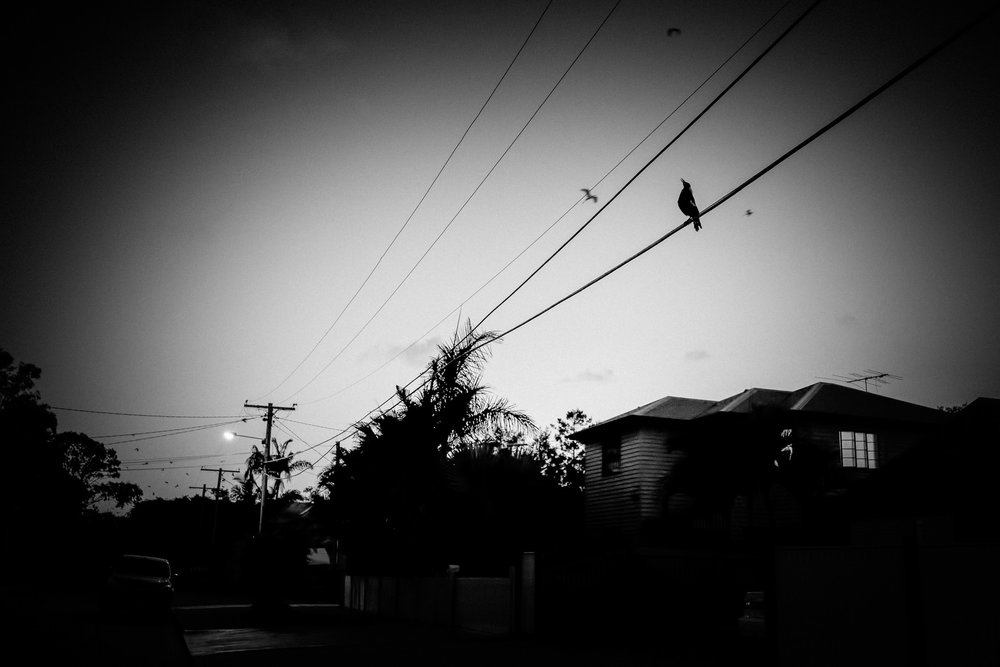 Magpie Song, Early Dawn