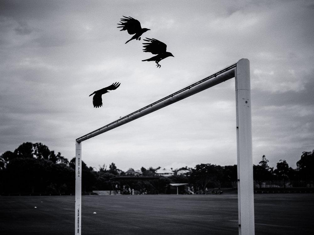 Three Crows Descending