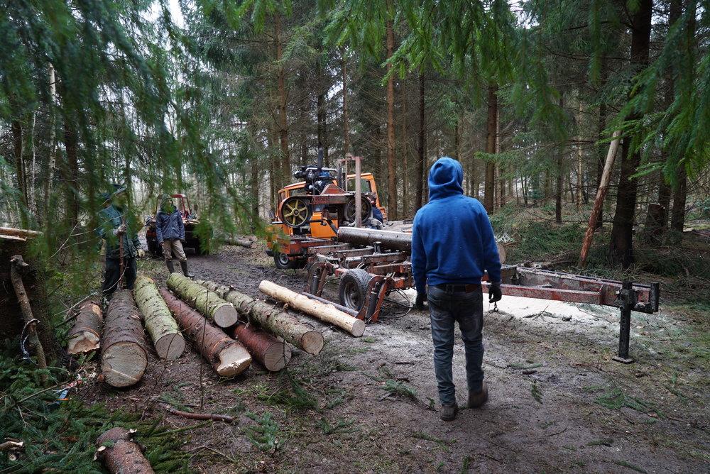 Skovning og fældning -