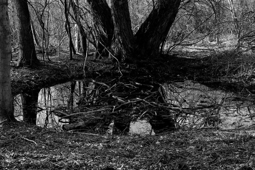 woods_alinemauch.jpg
