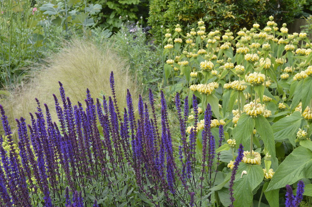 Plants for Exposed Gardens