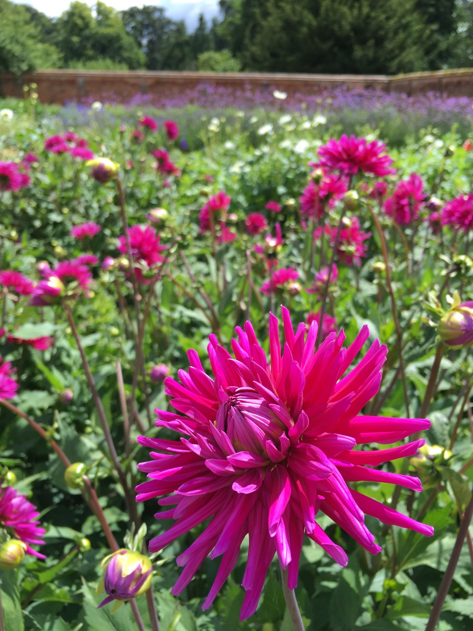 Photo credit:  Howbury Farm Flowers