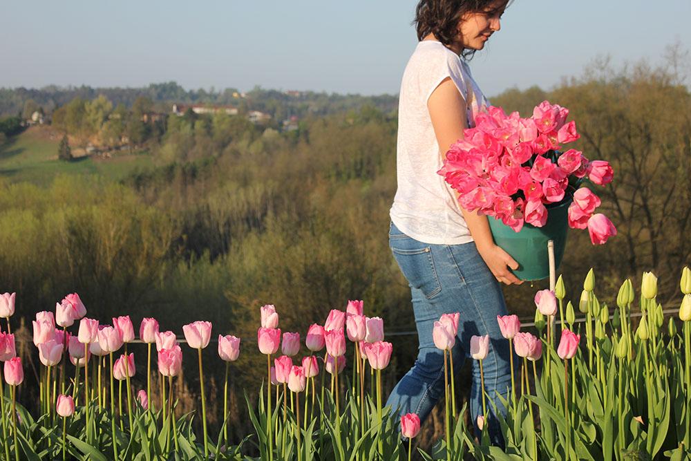 Tulipa 'Garders Rhapsody' · raccolta · VialeFlowerFarm-11.jpg