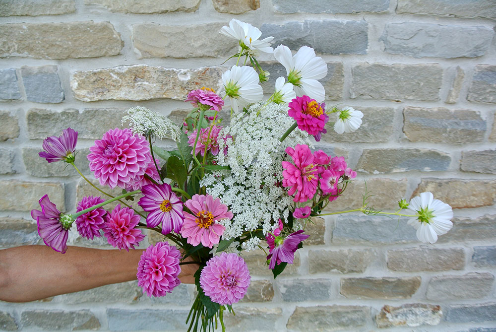 Dahlia Cosmos Daucus Zinnia bouquet.jpg