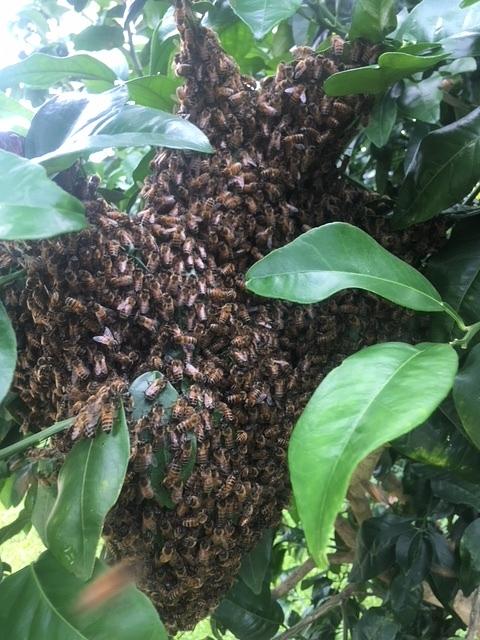 swarm-tree