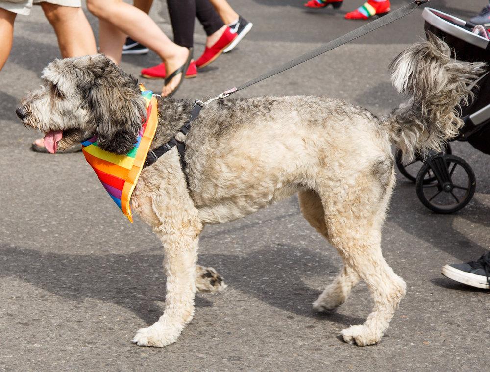 Pride Dog neckchief1.jpg