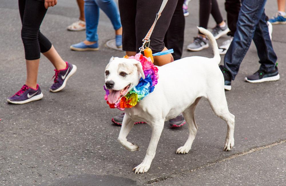 Pride Dog Ruff1.jpg