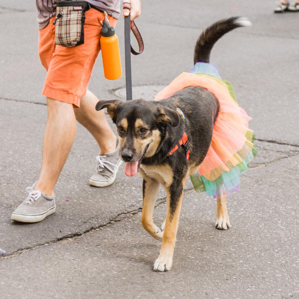 Pride Dog1.jpg