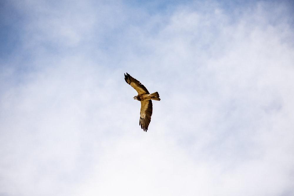 Hawk41.jpg