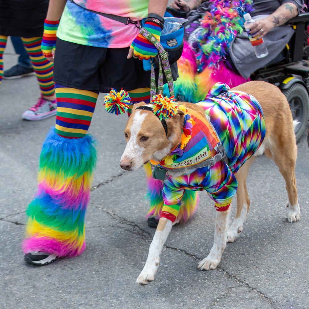 Pride dogs1.jpg