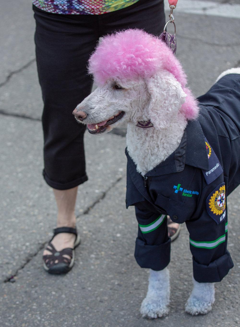 Pride dogs2.jpg