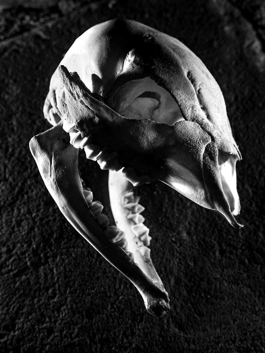 Skull_006.jpg