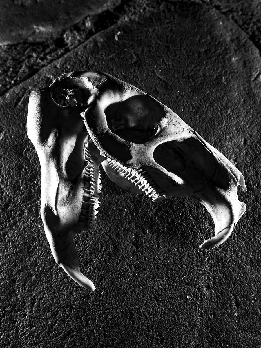 Skull_005.jpg