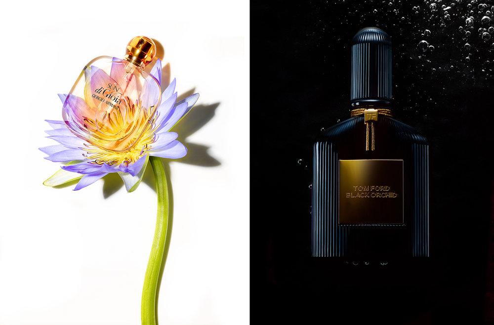 Sun di Gioia-TF orchid.jpg