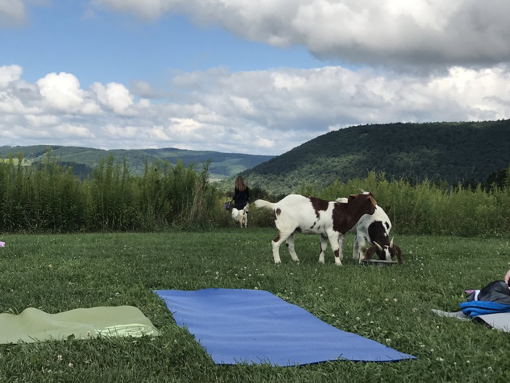 Yoga with Goats at ZiegenVine Homestead