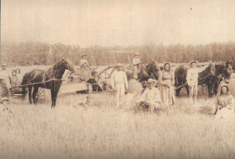 Relatives thrashing wheat, back in the day, in my hometown.  My great grandmother, Frieda, is one of the young girls on the far left.