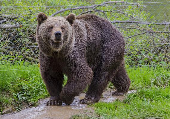 Bear Legs.jpg
