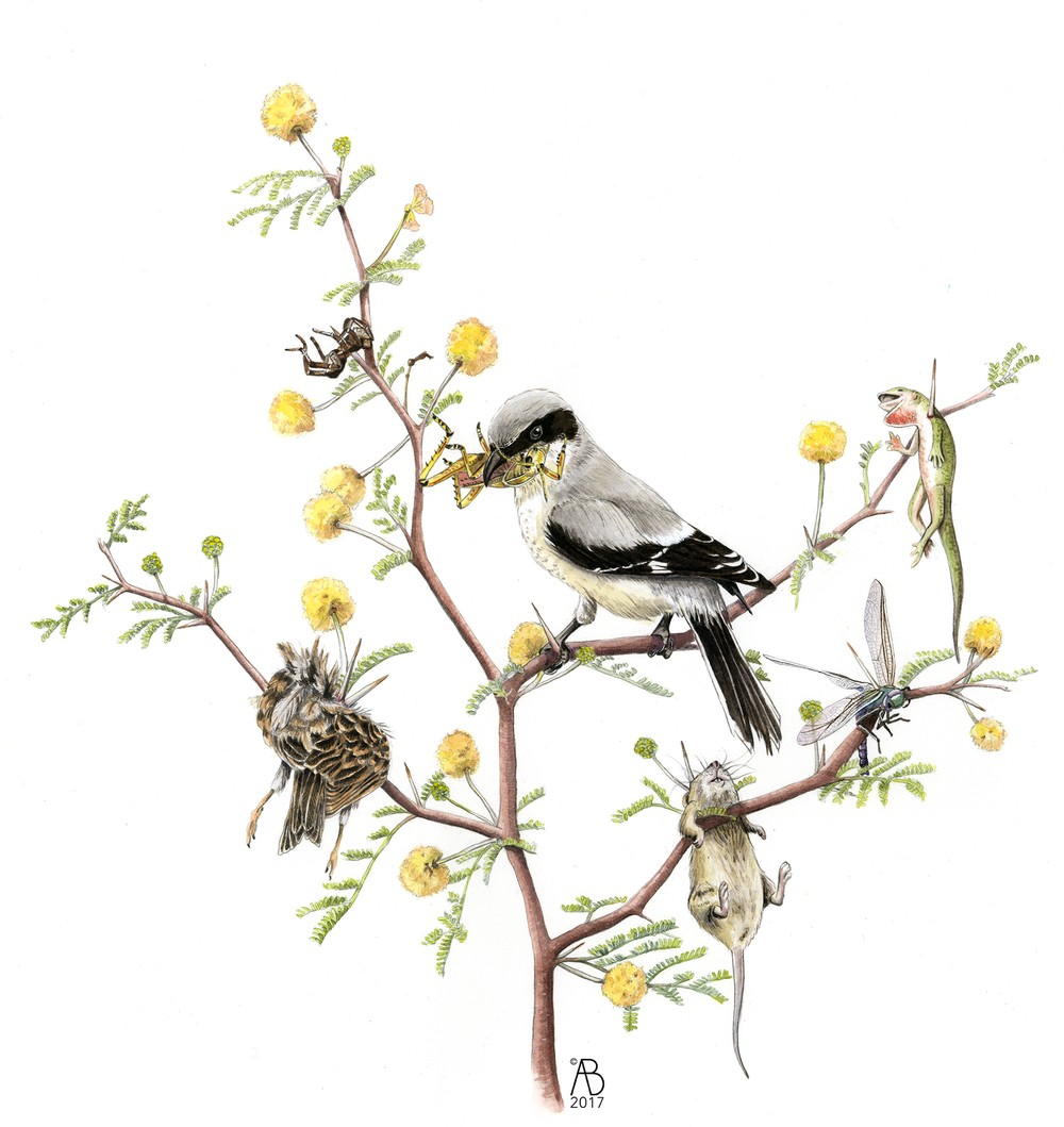 The Shrike's Pantree