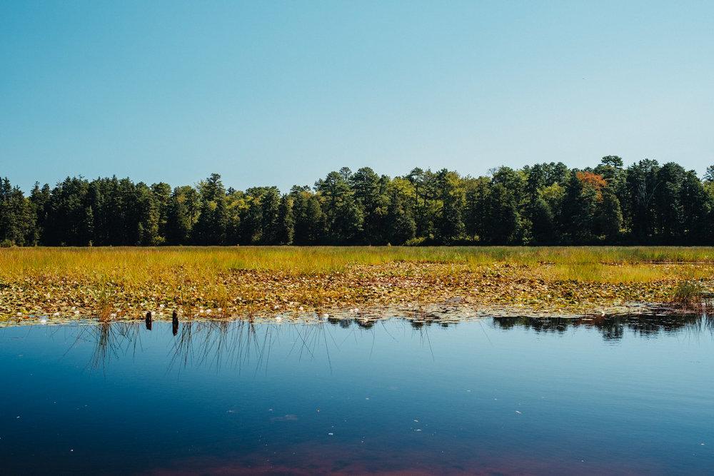 Wharton-State-Forest-Hiking-Mroczek-2834.jpg