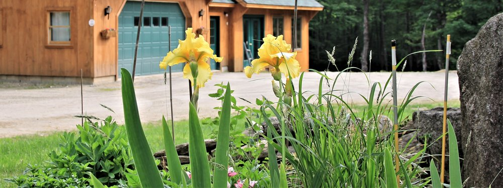 Irises blooming in front of the workshop