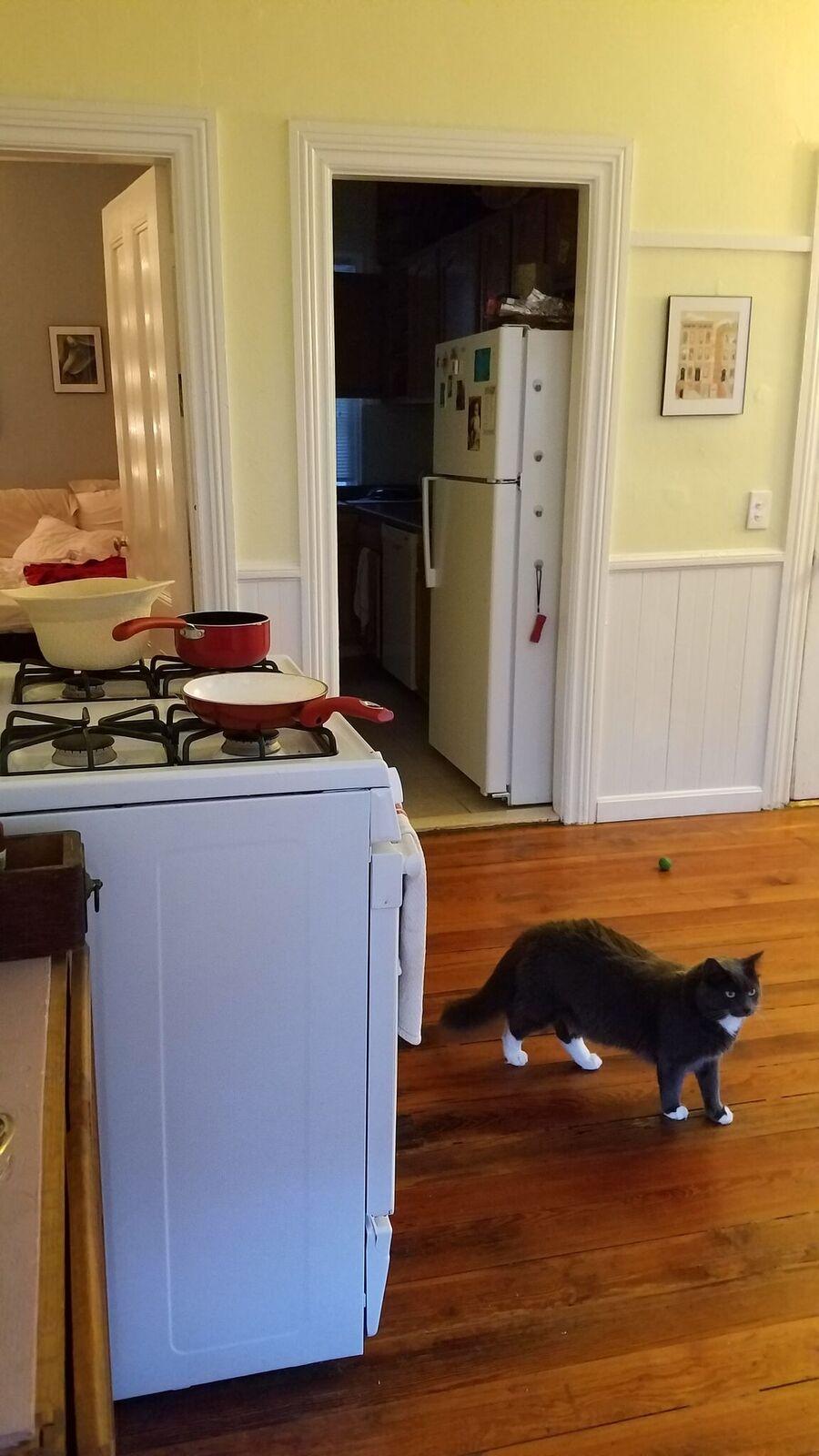 Kitchen and Greyson.jpeg