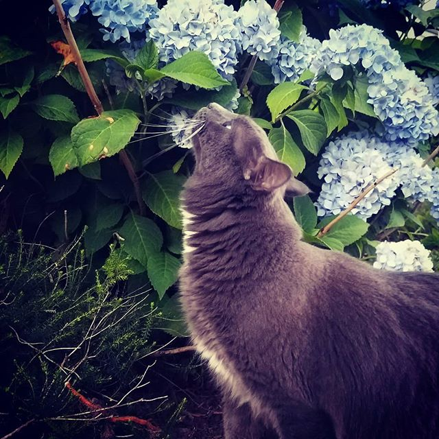 He may be overweight and likes to give me a scare while innocently exploring the neighbor's yard making me think he's run off forever but I love him, his kisses and how he stops to smell the flowers.