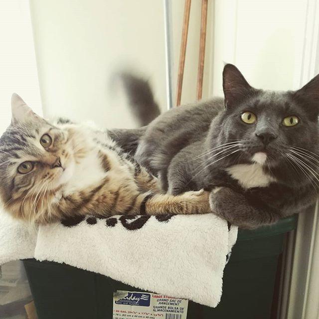 Who's your BFF? =) #greygrey #mama #petsofinstagram #catsofinstagram