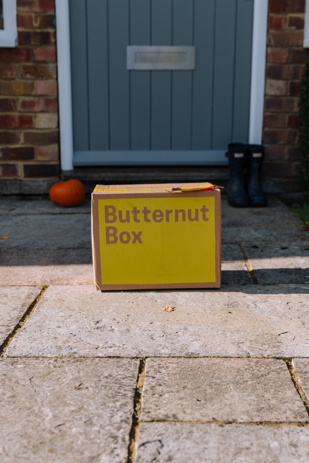 butternut-box-harley-4.jpg