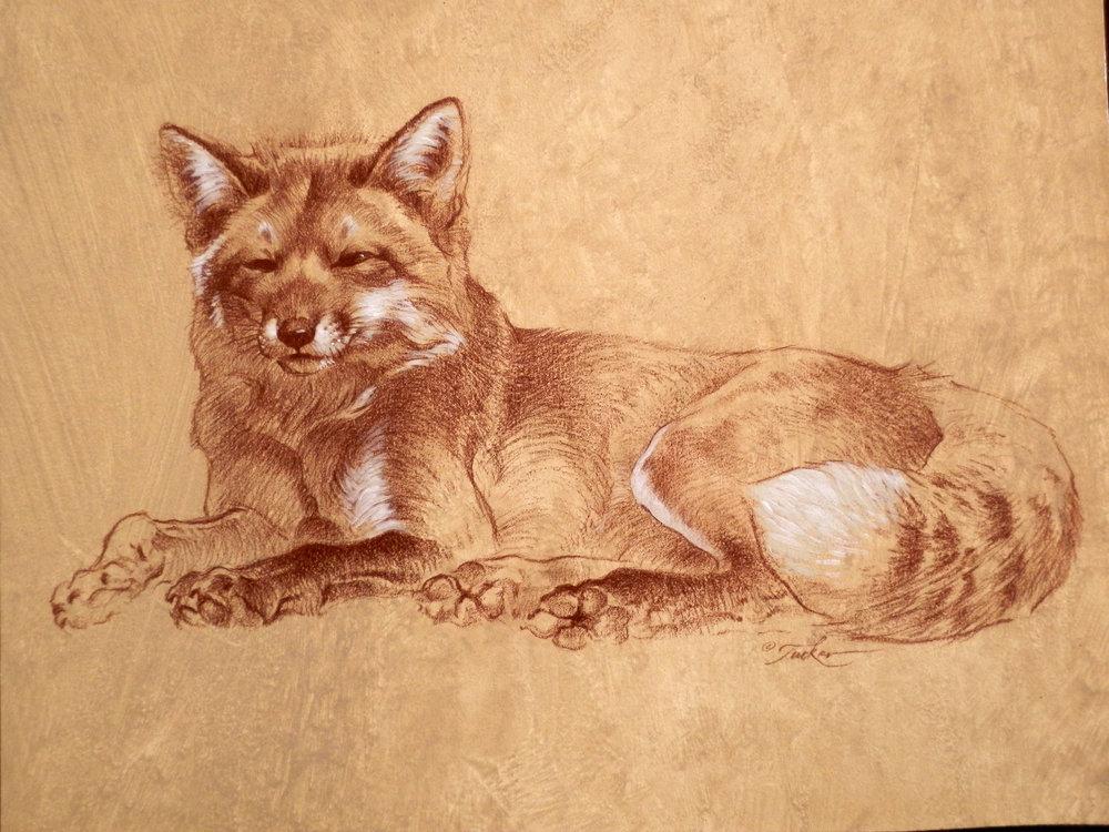 fox72-2500.jpg