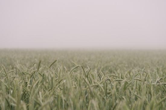 Sowing Gospel Seeds in Wintertime