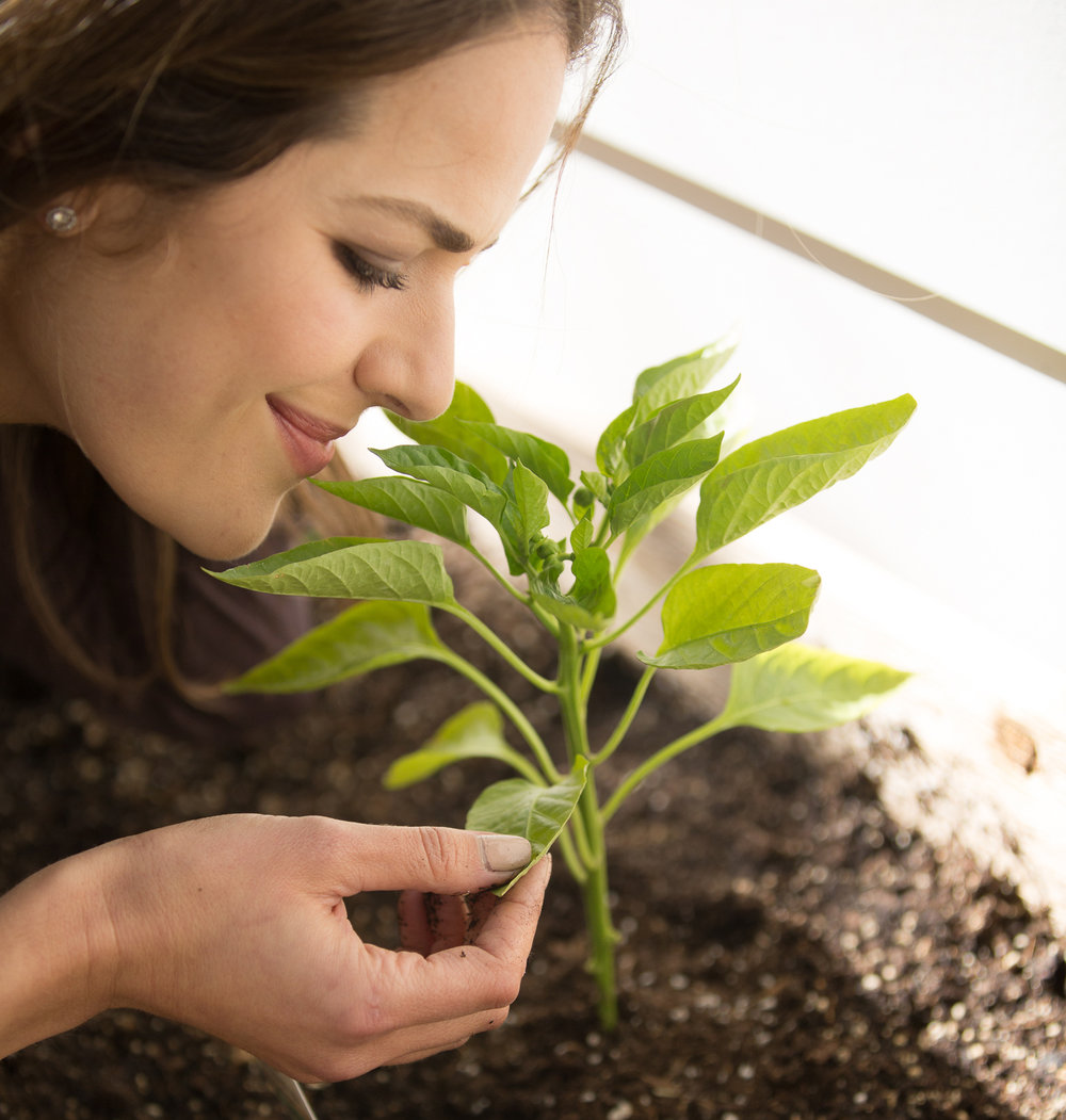 zelanasmellingplant.jpg