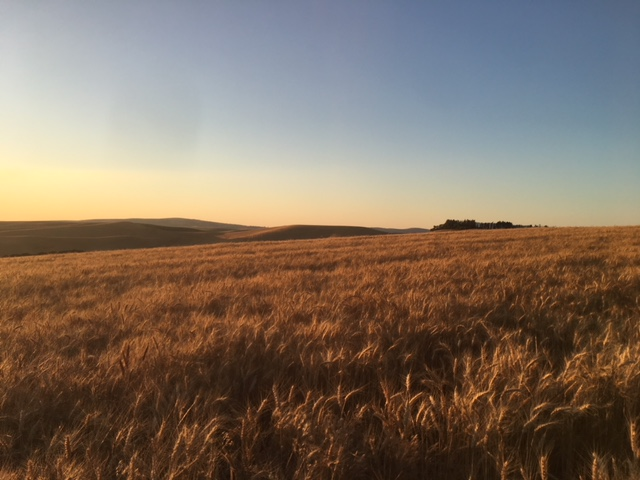 Travel Note:  The Palouse Prairie at dusk - just outside of Pullman, Washington.     Photo:  Anna Caro.   This fertile agricultural region produces some of the world's most bountiful crops, with its rich and deep topsoil covering an expanse of over 19,000 square miles.  Picturesque barns and farmhouses from the 1800's remain preserved in this dry climate; while sparsely populated, farms in this region tend to be environmentally sustainable and use some of the most progressive farming methods and machinery available.